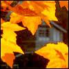 rachelmanija: (Autumn: small leaves)