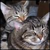 telophase: (Cats - Sora and Nefer)
