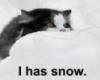 mellowtigger: (snow)